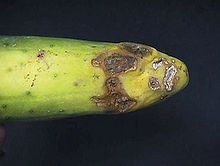 Plant Pathology, Cucumber Plant, Asian Vegetables, Plant Cell, Plant Diseases, Crop Rotation, Garden Pests, Fungi, Beets