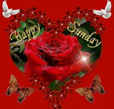 Happy Sunday sister and all.have a blessed,beautiful day.God bless you all.xxx take care ! Happy Sunday Pictures, Happy Sunday Quotes, Blessed Sunday, Morning Quotes, Sunday Images, Beautiful Red Roses, Amazing Flowers, Beautiful Hearts, Beautiful Gardens