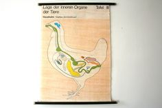 """East German Vintage Science Educational Pull Down Chart Poster- """"Haushuhn- Gallus domesticus"""" (chicken). €90.00, via Etsy."""