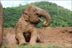 Bond With Elephants in Northern Thailand | 17 Amazing Trips For Animal Lovers