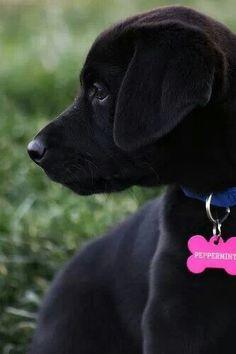 Layla needs this dog tag