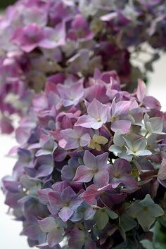 hortensias ....cuantos colores!                                                                                                                                                                                 Más
