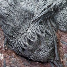 Crinoid Fossil Source by Crystals Minerals, Rocks And Minerals, Crinoid Fossil, Dinosaur Fossils, Extinct Animals, Prehistoric Creatures, Natural Forms, Archaeology, In This World