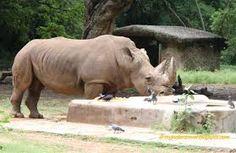 Sri Chamrajendra Zoological Gardens,Mysore,India