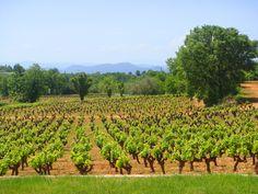 Le Mas du Terme aux pieds des vignes. Les vignes, aux pieds des Cévennes  - Hôtel Le Mas du Terme **** (Gard - Ardeche)