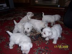 Hamish with his brothers and sisters .
