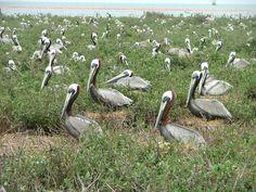louisiana wildlife pictures   FWS Natural Resource Web Links-- National Wildlife Refuges