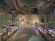 4 Museus de Dinossauros que você não pode deixar de conhecer no Japão -National Museum of Nature and Science   Copastur Prime
