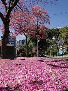 Curitiba, Paraná, Brasil (por Augusto Janiscki Junior, no Flickr)