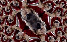 Mathspig's dog Sasha.  Create your own selfie like this using square eqn.  How? click on image.