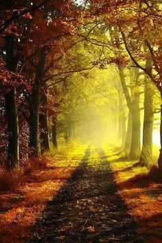 path ilumination