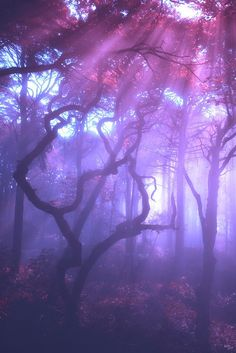 """The post """"photography Cool dark pink purple nature forest wonderland pastel goth gothic pastel goth mystic hellxno"""" appeared first on Pink Unicorn Forest Violet Aesthetic, Lavender Aesthetic, Fae Aesthetic, Aesthetic Pastel, All Things Purple, Shades Of Purple, Pink Purple, Periwinkle, Purple Unicorn"""