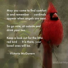 sayings and quotes about cardinals and death - Yahoo Image Search Results Estrella Cardinal, Cardinal Birds Meaning, Ladybug Meaning, Woodstock, Phrase Choc, After Life, Deep Thoughts, Grief, Me Quotes