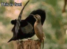 I Know That Feel,  Bird