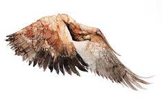 watercoloring-bird-18
