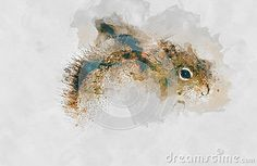 Squirrel. Watercolor art for your design.