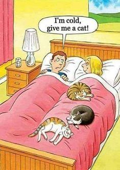 Funny Pick, The Funny, Cat Comics, Funny Comics, Crazy Cat Lady, Crazy Cats, Chats Image, Cute Cats, Funny Cats