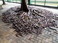 Raíces de árboles luchando contra la humanidad