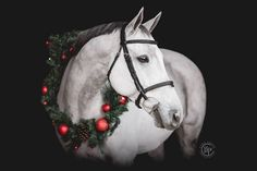 Christmas Horses, Equestrian, Animals, Beauty, Christmas, Animales, Animaux, Horseback Riding, Animal