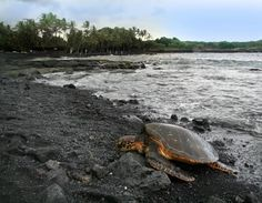 Black  Punalu'u Beach is located in Hawaii and is also known as the Black Sand Beach. The unusual black sand was created by lava flowing into the ocean. The basalt reaches the surface and forms this beautiful black beach.