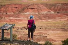Petrified Forest trails