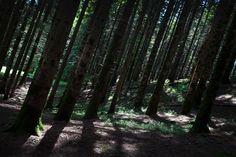 Camaldoli hermitage, in the Casentino woods, Tuscany: https://www.flickr.com/photos/silviafabbri/albums/72157681648999233