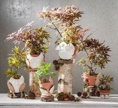 Eulen basteln! Succulents, Planters, Gardens, Owl Crafts, Furniture From Pallets, Succulent Plants, Planter Boxes, Plant, Window Boxes