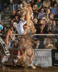 Cowboy And Cowgirl Roping Riding And Branding In Wyoming