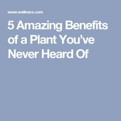 5 Amazing Benefits of a Plant You've Never Heard Of