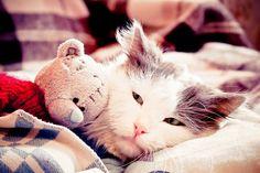my cat by a-place4my-head.deviantart.com on @deviantART