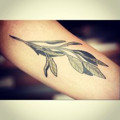 Alice rules botanical sage tattoo