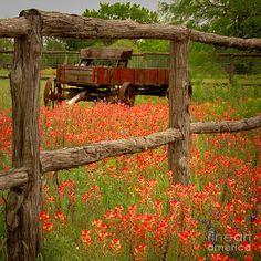 wildflowers wagon fence