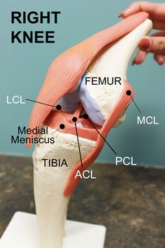 Here's what you should know about ACL injuries!