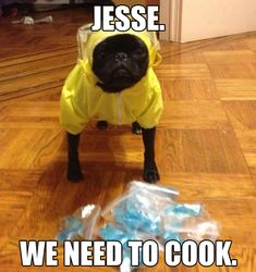 "Breaking Bad Meme: ""JESSE, WE NEED TO COOK,"" says the cute pug dog in the yellow hazmat suit."