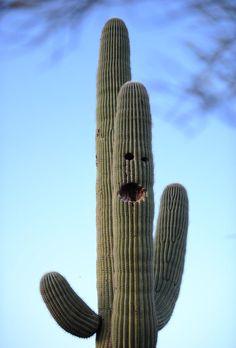 cactus plant in desert - Google Search