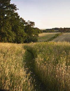 Nature Aesthetic, Summer Aesthetic, Aesthetic Green, Ar Fresco, Italian Garden, The Ranch, Plein Air, Natural World, The Great Outdoors
