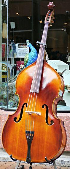 Innovation Strings, Kay Bass, Engelhardt Bass,Instruments, Accessories for bluegrass and jazz music - Fretwell Bass