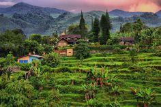 Puncak - Indonesia