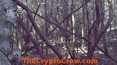 Bigfoot Stick Structure | The Crypto Crew