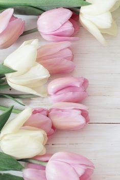 Spring is in the air and tulips are the perfect gift for the Mums in your life. - Spring is in the air and tulips are the perfect gift for the Mums in your life. Pink Tulips, Tulips Flowers, Flowers Nature, Pretty Flowers, Spring Flowers Wallpaper, Flower Wallpaper, Flor Magnolia, Frühling Wallpaper, Tulips Garden