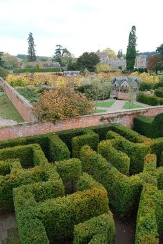 Hampton Court Gardens @Tom Percival. 90mins from Bristol, want to go please - weirdy scones and jam, weirdy furnished castle and A MAZE! Oh and that A-MAZING 200-year old Wisteria tunnel is there too :)