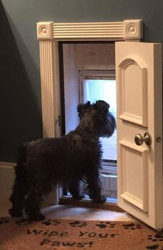 When puppies are expected I'll announce on my site. As an extra bonus, it's a lot simpler to teach a Schnauzer puppy not to bite, in place of an older Schnauzer Diy Pet, Niches, Dog Rooms, Kids Rooms, Dog Life, Pet Care, My Dream Home, Fur Babies, New Homes