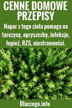 Health And Nutrition, Detox, Gardens, Herbs, Recipes, Outdoor Gardens, Rezepte, Garden, Recipe