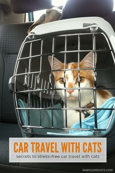 Car travel with cats is rarely stress-free. We share 5 practical tips to ensure a safe, successful and comfortable journey for your cat. Teacup Cats, Cat Crying, Living With Cats, Pet Dogs, Pets, Kitten Care, Cat Carrier, Pet Travel, Travel Tips