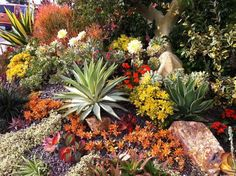 Gorgeous succulents, Jim Bishop of San Diego Horticulture Society