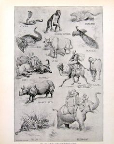 Wild Animals of Asia   Antique 1910 World by mysunshinevintage, $10.00