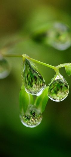 #green water droplets