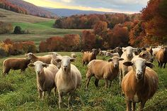 """Joe and Jackie Evans live and work by their motto: """"What is good for the land is good for our animals. What is good for our animals is good for our customers."""" Learn more about Evans & Evans Farm in Andes, NY located in Delaware County."""
