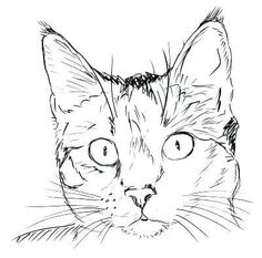 Gatos para colorear 13 Animal Sketches, Art Drawings Sketches, Animal Drawings, Easy Drawings, Drawings Of Cats, Animal Illustrations, Simple Cat Drawing, Cat Face Drawing, Realistic Cat Drawing