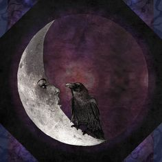 Looks like the Moon and Raven are having quite the Deep and Insightful Conversation!! by........??????